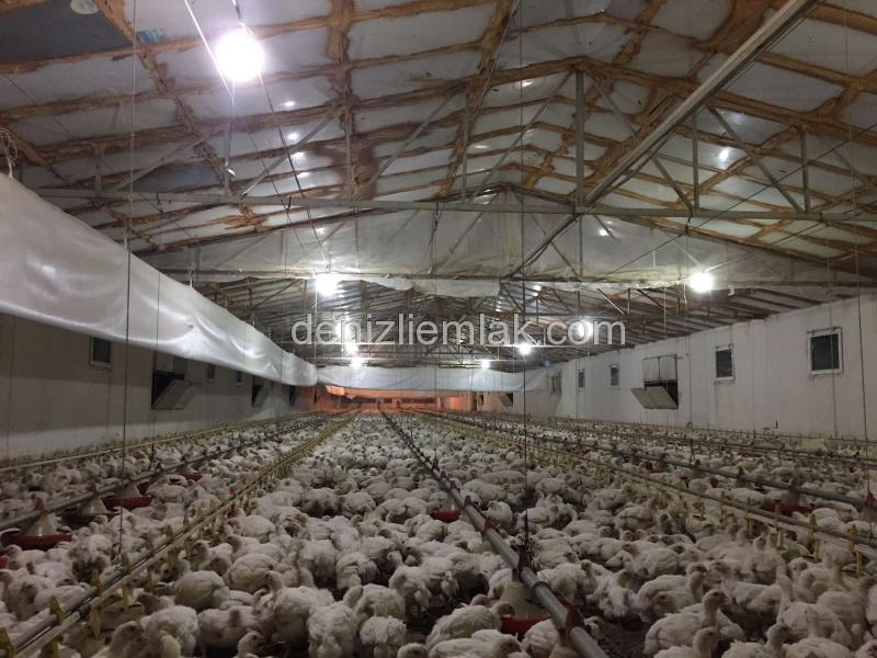 Tavuk Çiftliği 30.000 Kapasiteli