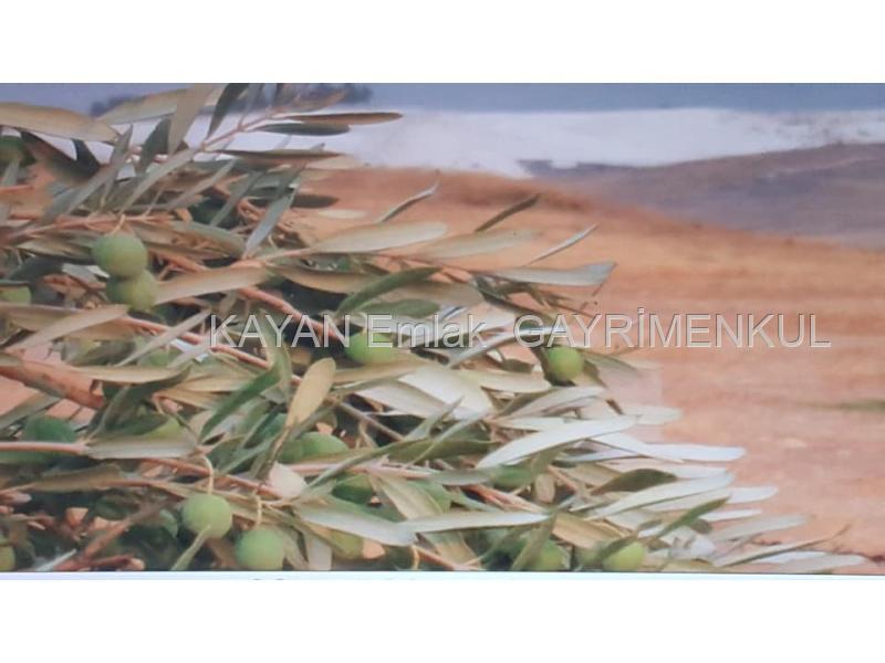 denizli karahayıt akköyde satılık arazi